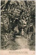 Missiën Der Paters Van Den H Geest, Weg Onder Banaanbomen, Oost Afrika (pk44356) - Cartes Postales