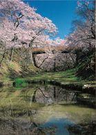 1 AK Japan * Kirschblütenzeit In Japan * - Other