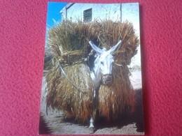 PRECIOSA POSTAL POSTCARD POST CARD BORRICO CARGADO DE TRIGO BURRO BURRITO DONKEY WHEAT VER FOTO/S - Burros