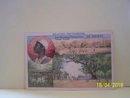 GUINEE. LES COLONIES FRANCAISES. PUBLICITE MEDICALE. - Guinea