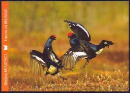 Belarus 2011 Bird Fauna Of Grouse - Belarus
