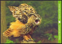 Belarus 2011 Fauna Owl - Belarus