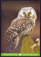 Belarus 2011 Owl Fauna - Belarus