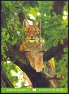 Belarus 2011 Lynx Fauna - Belarus