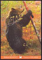Belarus 2014 Fauna Bear - Belarus