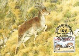 1990 - ETHIOPIA  -  Walia Ibex  - Bouquetin D'Abyssinie - Ethiopia