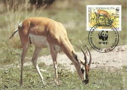 1992 - MOGADISHU - SOOMAALIYA -   Gazelle Soemmerring Sommering - Somalia