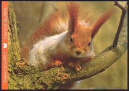 Belarus 2014 Fauna Squirrel - Belarus