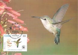 1992 - CUBA Habana -  Bee Hummingbird  - Colibri - Cuba