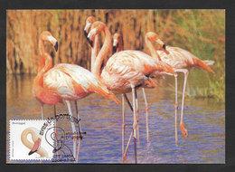 Portugal Oiseau Flammant Rose Carte Maximum 2000 Flamingo Bird Maxicard - Flamingo
