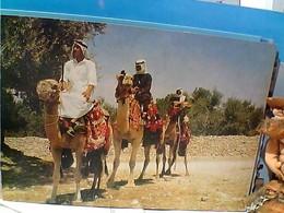 ISRAELE   JERUSALEM  CAMMELLI CAMEL  N1985  GR1047 - Israel