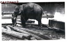THAILANDE THAILAND CHIENGMAI CHIANG-MAI NOTHERN PRONVINCES ELEPHANTS ELEPHANT - Thailand