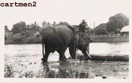 THAILANDE THAILAND CHIENG-MAI CHIANG-MAI CHIANGMAI NOTHERN PRONVINCES ELEPHANTS ELEPHANT - Thaïlande