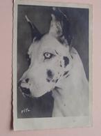 HOND - CHIEN - HUND - DOG ( Ylla ) Edit. GANY Paris ( Zie Foto's Voor Detail ) ! - Honden