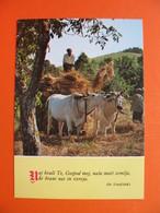 OX-KRSCANSKA SADASNJOST(SV.FRANCISEK)-mowing And Hay Harvesting - Stieren