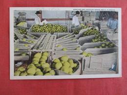 Sorting & Packing Grape Fruit Florida        Ref 2929 - Pin-Ups