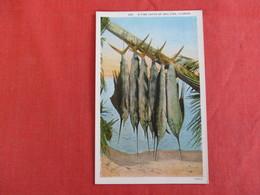 A Fine Catch Of Sail Fish  Florida        Ref 2929 - Pin-Ups