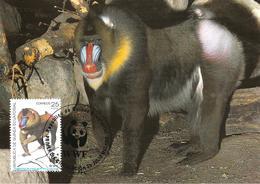 1991 - MALABO GUINEE EQUATORIALE - GUINEA ECUATORIAL - Mandrill - Guinea Equatoriale