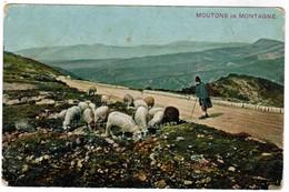 CPA Moutons De Montagne, Sheep, Schapen (pk44360) - Elevage