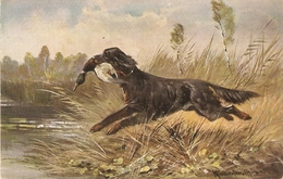 """""""Hunting Scene"""". Dog With Prey""""  Nice Antique Postcard. Artist Signed - Caza"""