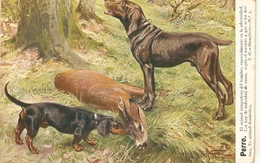 """""""Hunting Scene"""". DogS With Prey""""  Nice Antique  Spanish Postcard. - Caza"""