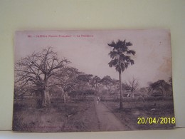 DABOLA (GUINEE) LES ARBRES. LA RESIDENCE. - Guinea