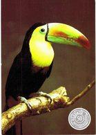 Thème - Oiseaux - Toucan à Bec Caréné - Uccelli