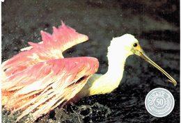 Thème - Oiseaux - Spatule Rose - Uccelli