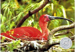 Thème - Oiseaux - Ibis Rouge - Parc Des Oiseaux Villars Les Dombes - Uccelli