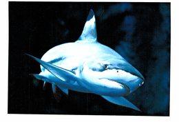Thème - Animaux - Requin Pointe Noire - Pesci E Crostacei