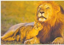 Lion   H12        Famille Lions - Lions