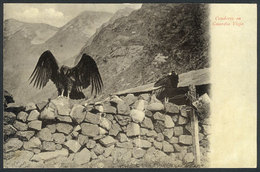 742 CHILE: Condors At Guardia Vieja, Andes, Ed.Eggers, Circa 1905, VF Quality! - Chile