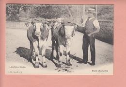 OUDE POSTKAART ZWITSERLAND - SCHWEIZ -    AGRICULTURE - LAENDLICHE STUDIE - ETUDE CHAMPETRE = 1900'S - Suisse