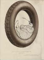 MONTROUGE PUBLICITE MICHELIN GRAVE ET IMPRIME PAR LA PLATINOGRAVURE ENCRE HELIO DE CH LORILLEUX PAPIER ALFA ANNEE 192030 - Otros