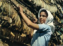TABAC SECHAGE DU TABAC En Grèce - Landbouw