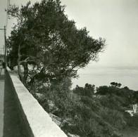France Route De Nice à Villefranche Mont Boron Ancienne Photo Stereo Amateur Possemiers 1900 - Stereoscopic