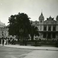 Monaco Monte Carlo Casino Palmiers Ancienne Photo Stereo Amateur Possemiers 1900 - Stereoscopic