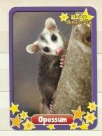 REF. 44 - BABY ANIMALS - OPOSSUM - N° 153 - EDIBAS - Trading Cards