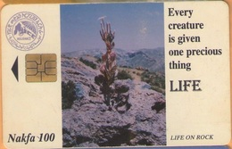 Erithrea - Eritel, ER-ERI-0006, Cactus, 30.000ex, 1998, Heavily Used - Eritrea