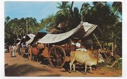 (RECTO / VERSO) MALAISIE - MALACCA - BULLOCK CARTS - CPA VOYAGEE - Malaysia