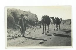 Pakistan Waziristan Razmak Photograph .Wazirie With Camels . - Pakistan