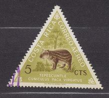 Costa Rica 1963 Mi. 612    5 C. Einheimische Saugtier Paka 3-Sided Stamp - Costa Rica