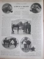 GUERRE 14-18  Le Dépot  De La Croix-Bleue à MORET CHEVAL De Guerre Bléssé  équitation Blessure Soins - Unclassified