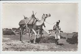EDITEUR DE DJIBOUTI - NOMADE - Djibouti