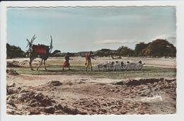 SOMALIE - LE VISAGE DU PAYS SOMAL - LE RETOUR DU DANN - Somalia