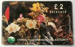 Akamus Forest - Cyprus
