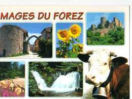 Images Du FOREZ,tournesols, Chateau, Cascade,cache - France