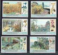 LIEBIG  - NL -  6 Chromos N° 1 à 6 -  Reeks/série S.1290 - Hoe En Waarom De Bloemen Insecten Aantrekken. - Liebig