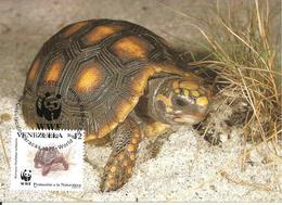 1992 - CARACAS -  Red Footed Tortoise  - Tortue Charbonnière à Pattes Rouges - Venezuela