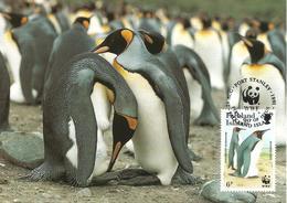1991 - FALKLAND ISLANDS - King Penguin - Manchot Royal - Falkland Islands